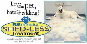 mobile,dog,grooming,jupiter,pet,dog grooming,pet grooming,mobile dog grooming,groomer,mobile pet groomer,mobile dog groomer,mobile pet groomer jupiter,mobile dog groomer jupiter